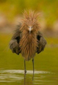 Aries Angry Bird pic